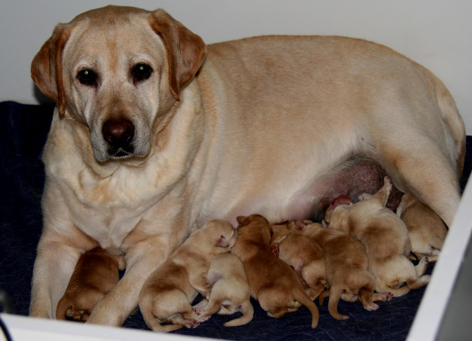 WILLOW AND HER PUPPIES 7/14/08.JPG